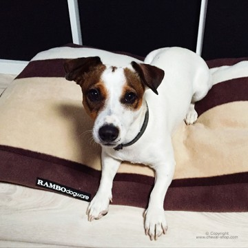 Coussin pour chien Rambo Newmarket