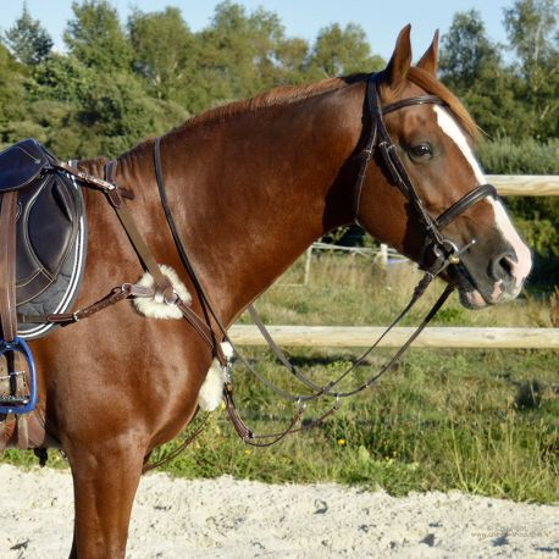 avant-garde de l'époque chaussures classiques bien connu Collier de chasse 5 points mouton TIME Rider | Equipement cheval