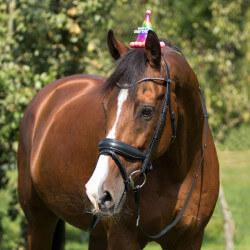 Chapeau d'anniversaire cheval