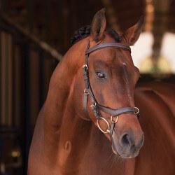 Bridon Rambo Micklem Multibride Horseware